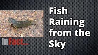 inFact: Fish Raining from the Sky