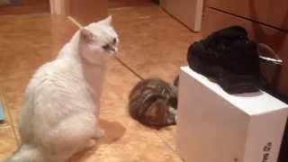 Котенок атакует попой