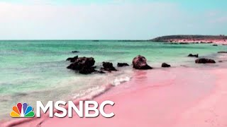 Reports Show NRA's Lavish Spending On Luxuries For Wayne LaPierre | Rachel Maddow | MSNBC