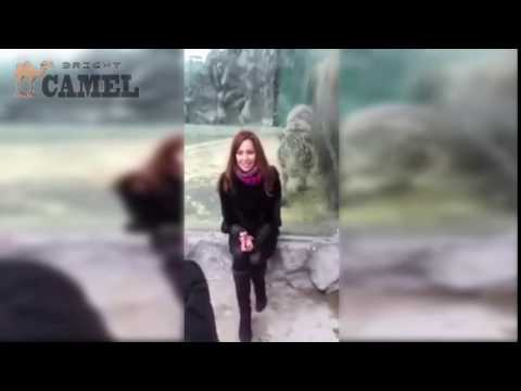 Tiger Sneak Attack On A Woman In Russian Zoo
