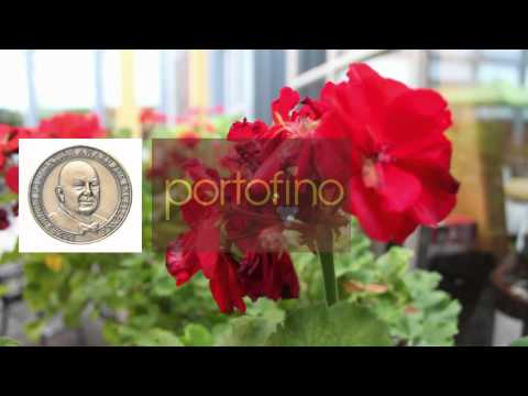 Portofino | Italian and American cuisine