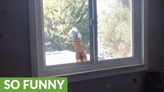 Surprised squirrel jumps after being caught in bird feeder
