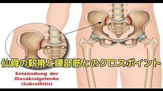 筋膜はがし 筋膜リリース 仙腸関節クロスポイントアプローチ!