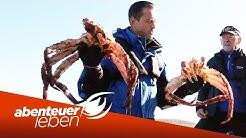 Seafood - XXL: Die Königskrabbe aus Norwegen   Abenteuer Leben   Kabel Eins