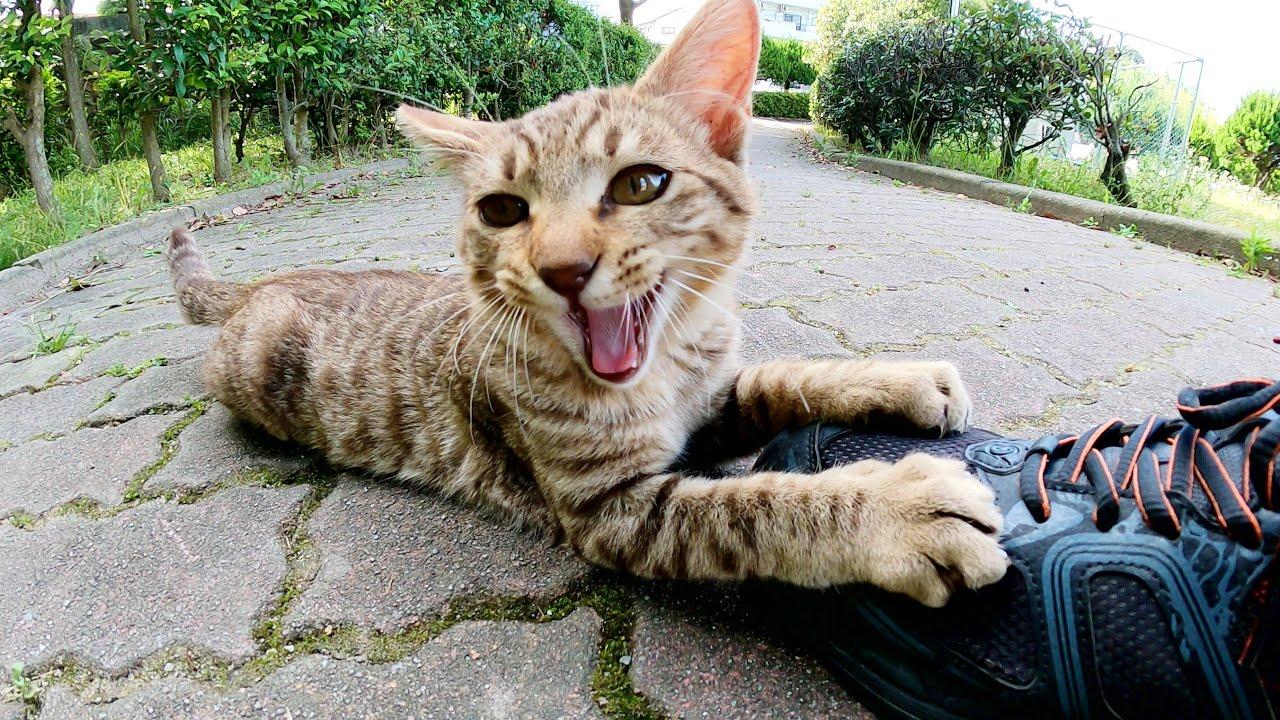 公園に捨てられた子猫達が無邪気すぎてつらい・・・