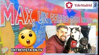 Perro youtuber e influencer es entrevistado en televisión