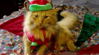 Jingle Bells animalier