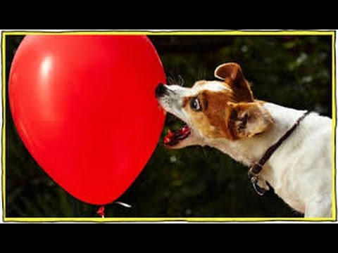 Cats and Dogs vs. Balloons! - Funny Compilation 2014 - Hilarious Cats and Dogs