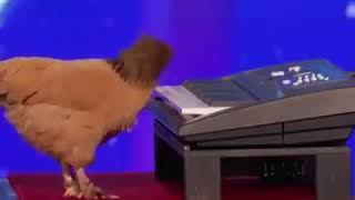 Baixar America's Got Talent 2019: Rooster playing piano