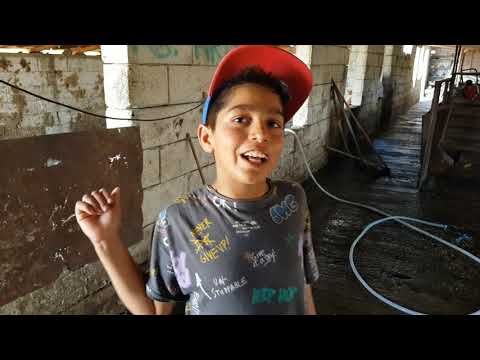 Daily vlog...... (activitățile de la ferma  solomon)💪✌✌🐄