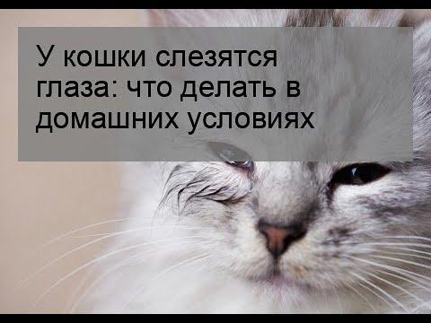 Как вылечить глаза кошке в домашних условиях