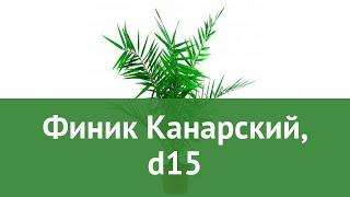 Финик Канарский, d15 обзор ЦКР0330 бренд производитель