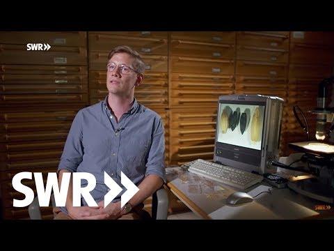 Archäologie erleben - Akte Jungsteinzeit | Geschichte im Südwesten