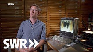 Archäologie erleben - Akte Jungsteinzeit | SWR Geschichte im Südwesten