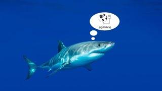 كابلات الإنترنت البحرية.. القرش ولصوص الاسكندرية