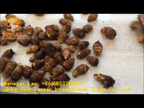 China fresh taro