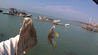 釣魚趣 台中麗水漁港 前打落入