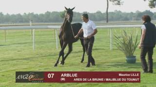 Grand Show Anglo 2016 : Lot 7 - ARBLUE