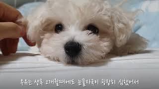 [소개해드림] 눈물자국 고민인 견주분들~ 저알러지사료 …
