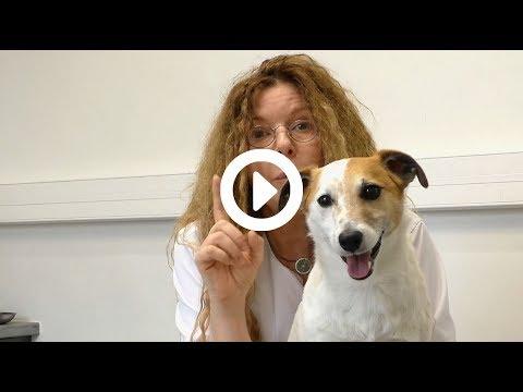 Croquettes Joyeuses Gambades - Avis Du Dr Vétérinaire Florence DESACHY