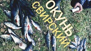 Учимся ловить КРУПНОГО ОКУНЯ на джиг Спиннинговая Рыбалка на окуня на Реке осенью 2020