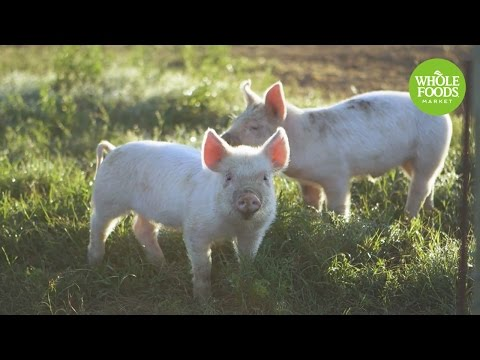 Thompson Farms l Stories From The Field | Whole Foods Market