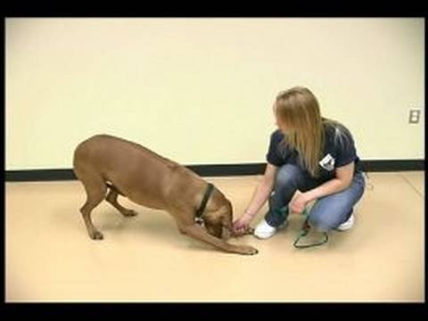 Dog Tricks : Bowing Dog Trick