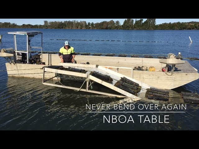 NBOA (Never Bend Over Again) Table - Oyster Industry