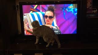 Любимое домашнее животное )🤣😘 Самый внимательный телезритель  Comedy Woman