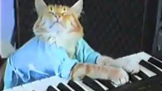 Charlie Schmidt's Keyboard Cat! - THE ORIGINAL!(WATCH: Keyboard Cat meets Grumpy Cat! http://www.youtube.com/watch?v=QUSuTEPFX_U http://www.facebook.com/thekeyboardcat ..., 2007-06-07T19:45:44.000Z)