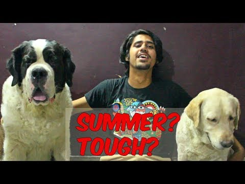 HOW TO TAKE CARE OF YOUR DOG IN SUMMERS | feat. Snowy and Theasa | Wildly Indian