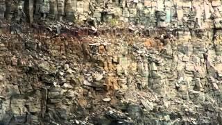 Полет птенца вниз со скалы SD