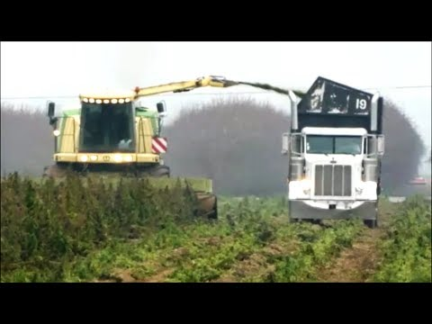 Harvesting Industrial Hemp for CBD oil – Dewatering solutions with VincentCorp screw press