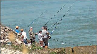 Рыбалка на Чехонь на реке Кубань клюет каждый заброс