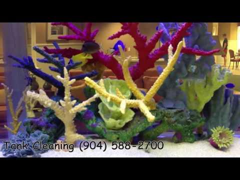 Jacksonville, FL. Fish Tanks Service Quotes   904.588.2700   Jacksonville, Florida.