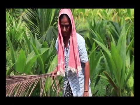 Coconut Farming and Success story Hindi