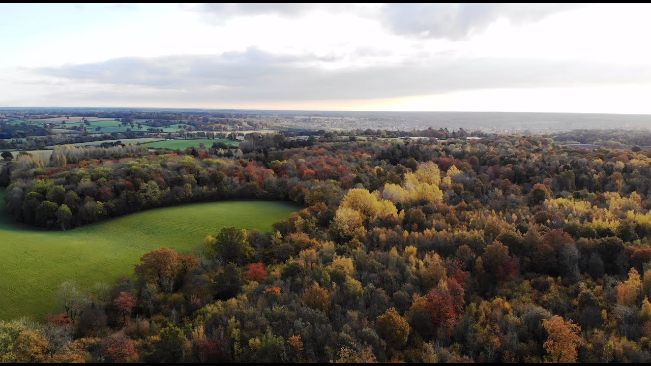 Wild Camping 10 - Broaks Wood, Halstead, November 2019 ...
