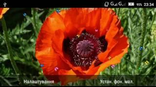 Poppy Magic Flowers LWP screenshot 4