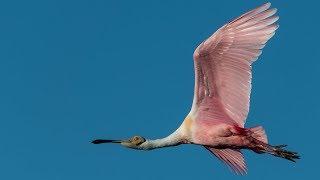 Nikon D850 Bird In Flight - Wildlife Autofocus System Setup