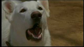 Amazing Dog in WHITE DOG (1982) Scene 2