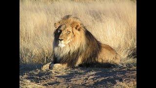 Beautiful Wildlife in Africa - Sleep and Relax Music Screensaver
