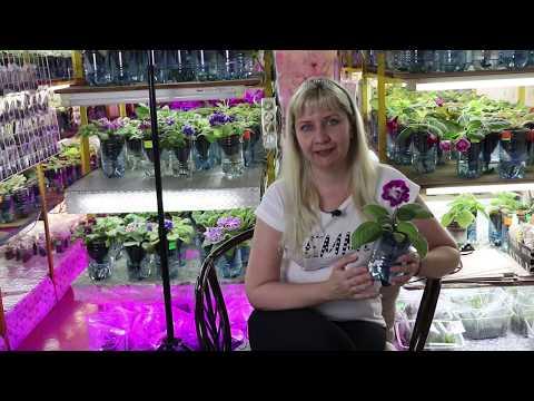 Вопрос: Сколько стоит земля для цветов в цветочном магазине?