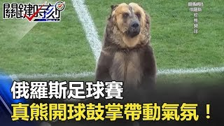 驚!俄羅斯足球賽 出現「真熊」開球 會鼓掌、帶動氣氛!! 關鍵時刻 20180419-6 黃創夏 朱學恒