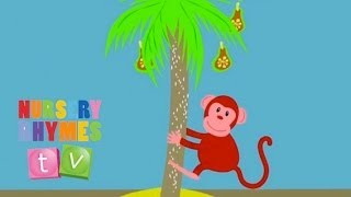 MONKEY | Baby Songs. Baby Music. Baby Learning Songs. Nursery Songs. Preschool Songs.