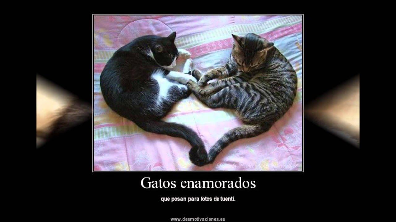 El Club De Los Gatos Dia Del Amor Y La Amistad Youtube