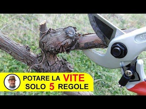 POTARE LA VITE SOLO 5 REGOLE