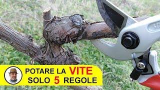 Download lagu POTARE LA VITE SOLO 5 REGOLE