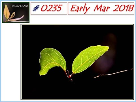 Ashrama Gardens Photo Video # 0235 - March 3, 2018 - Early March 2018