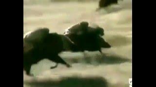 Małpy ujeżdżające guźce