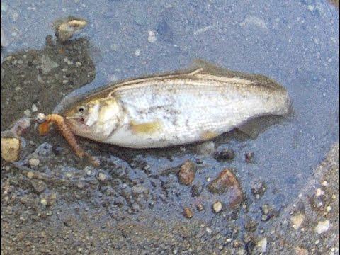 San Gabriel River Fishing Trip: No More Trout